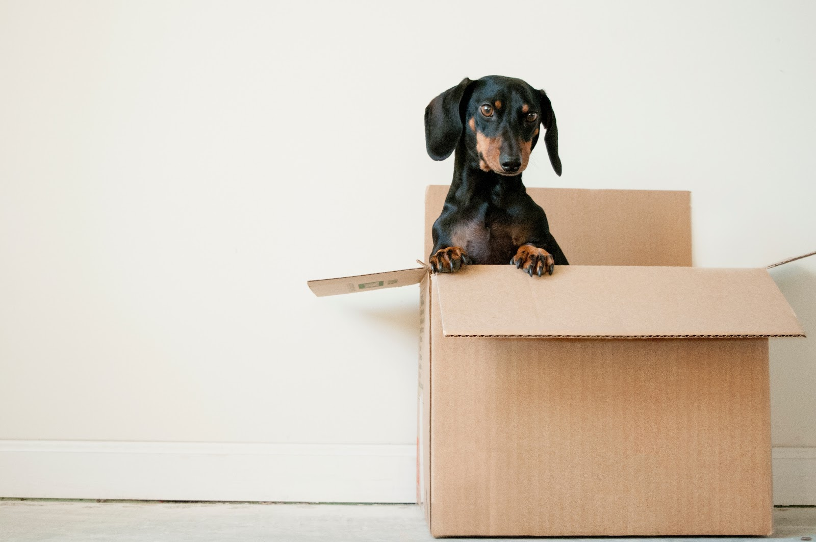 Cardboard Boxes 101: Choosing The Right Solution for Your Business